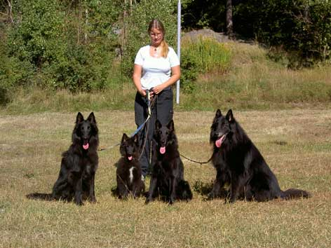 This is me with 4 children out of s.r. RA BSG-00 Chili van't Belgisch Schoon. They are all from different litters. From the left: Qobra, Ucci, Soya and my own Pascha. Photo taken September 11, 2004, by Carin Lyrholm.
